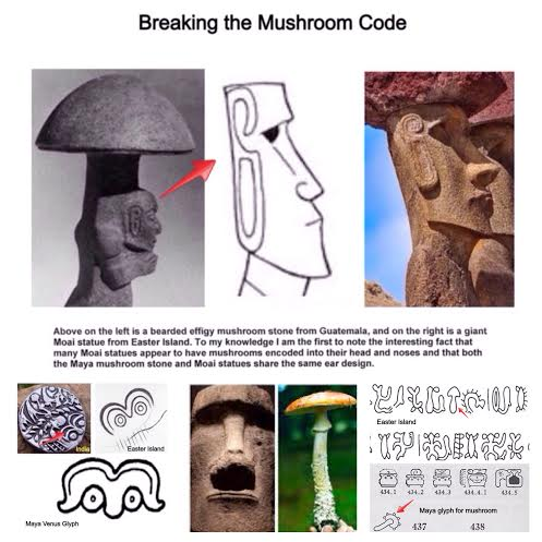 Hidden In Plain Sight Breaking The Mushroom Code