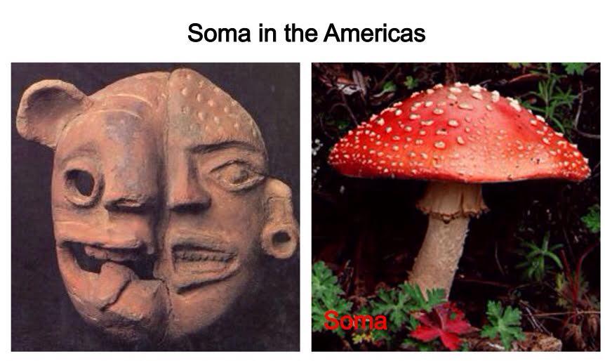 Hidden In Plain Sight Breaking The Mushroom Code